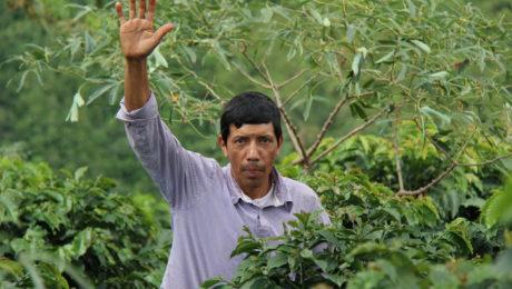 Kaffeefarmer der Kooperative